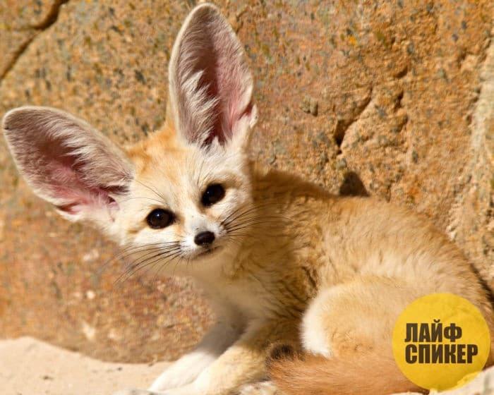 10 самых маленьких животных в мире