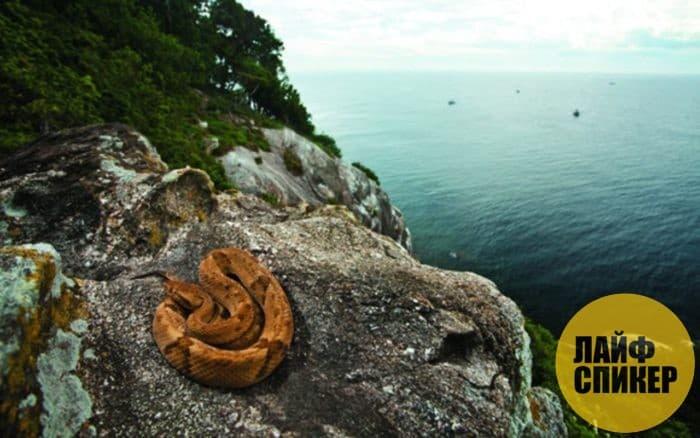 Остров Змеиный, Бразилия