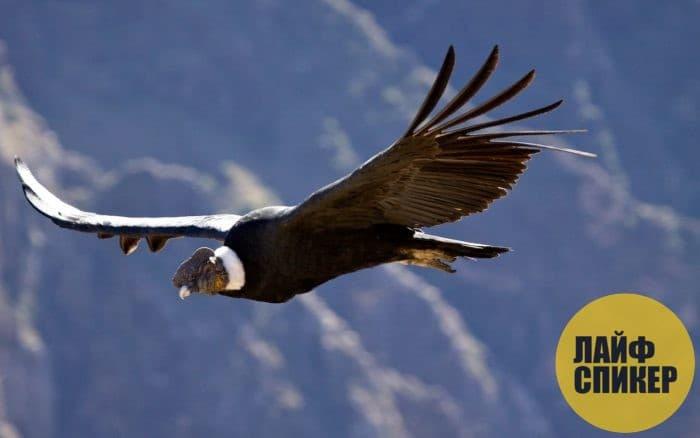 Самые крупные виды птиц в мире