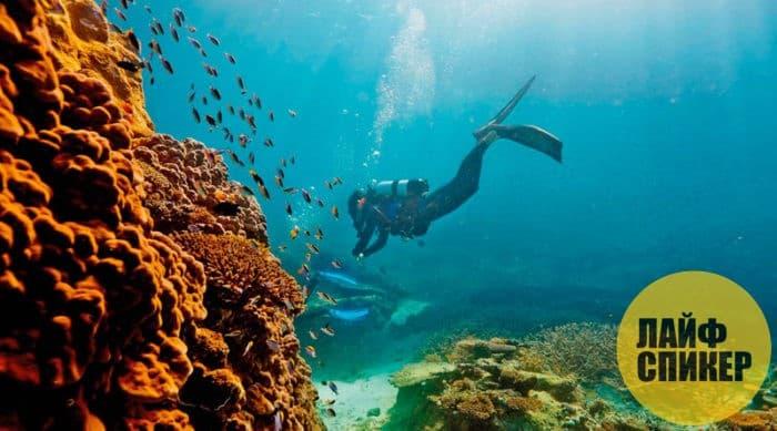 Reef El Arrecifal nan Veracruz