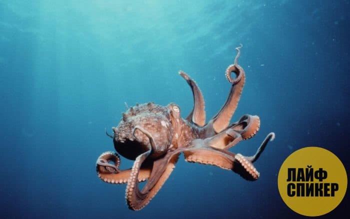 Осьминоги и кальмары