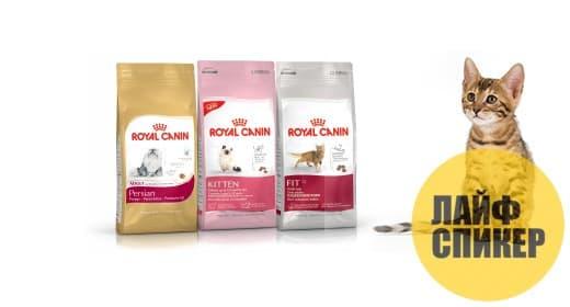 Популярные сухие корма для котят