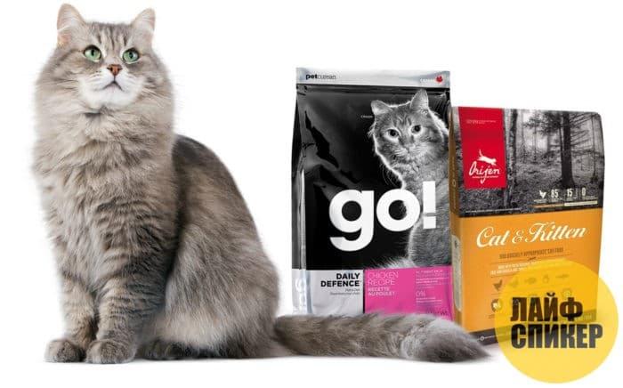 Корма-холистики для кошек: Рейтинг 2018 года