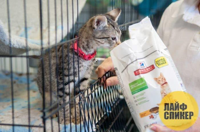 Рейтинг сухих кормов премиум класса для кошек