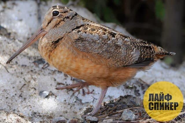 Самая медленная птица в мире