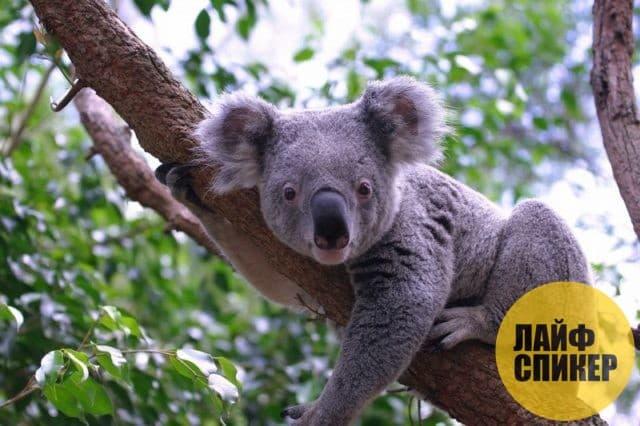10 самых медленных животных планеты