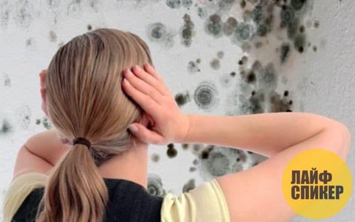 Причины появления грибка и плесени