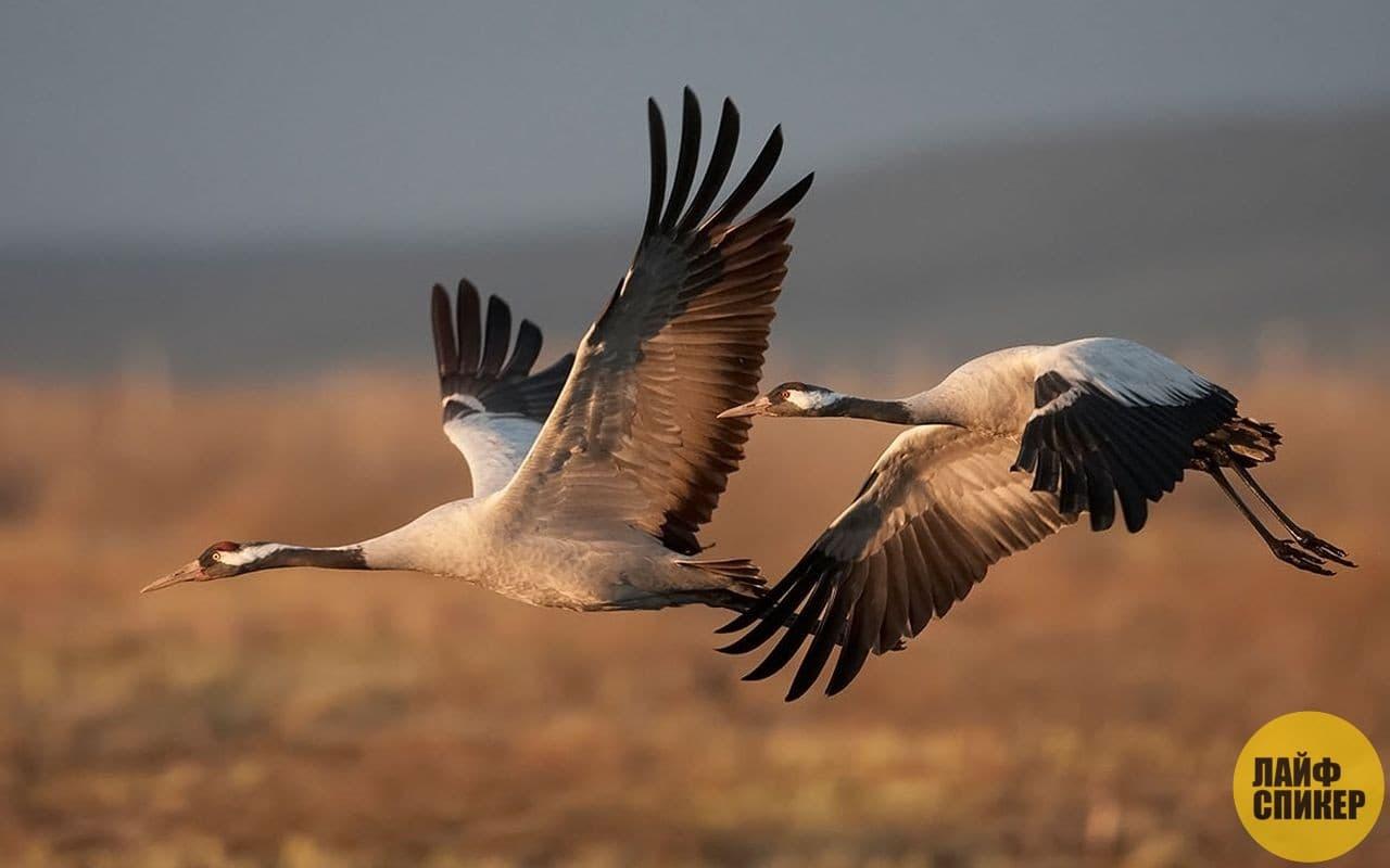 najväčšie vtáky Fórum pre dospelých porno post