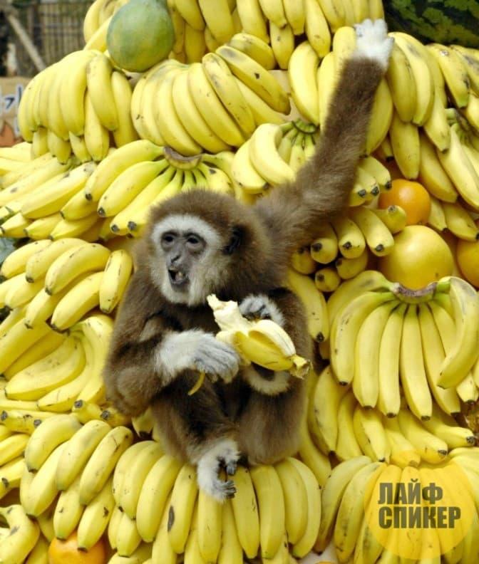 Лайфхак при выборе бананов