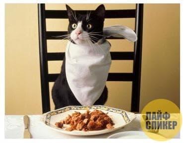 10. Прожорливый кот