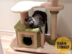 3. Кошачья недвижимость