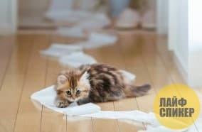 9. Туалетная бумага