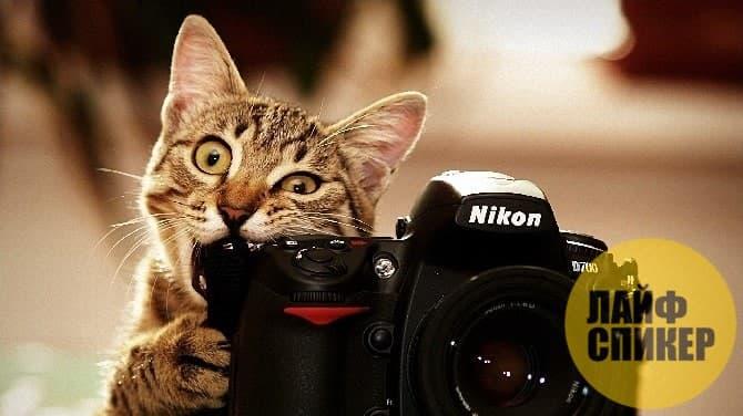 Как протекает фотосессия?