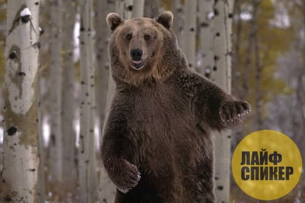 Полезные сведения о медведе