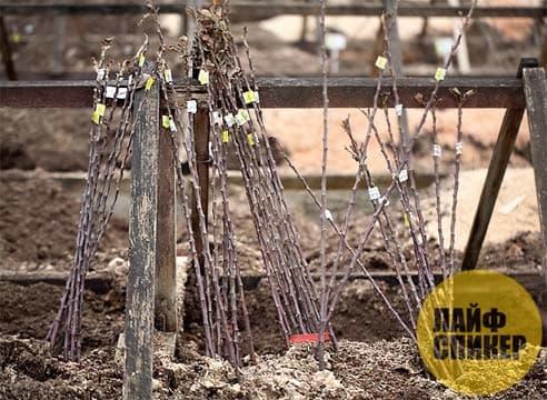 Ki sa ki fè ak plant ki pa t 'gen tan nan plant nan sezon otòn la?