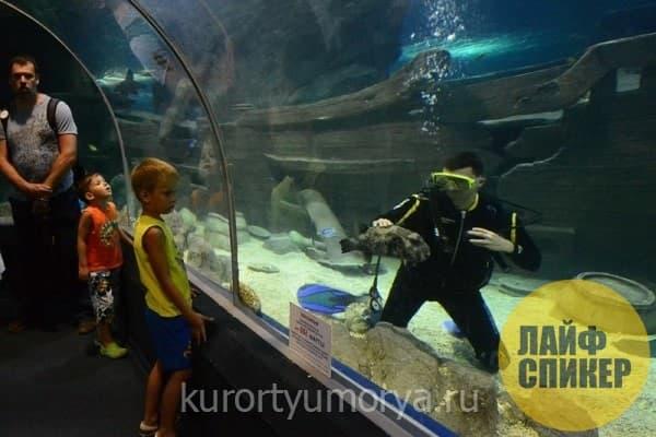 Океанариум Sochi Discоvery