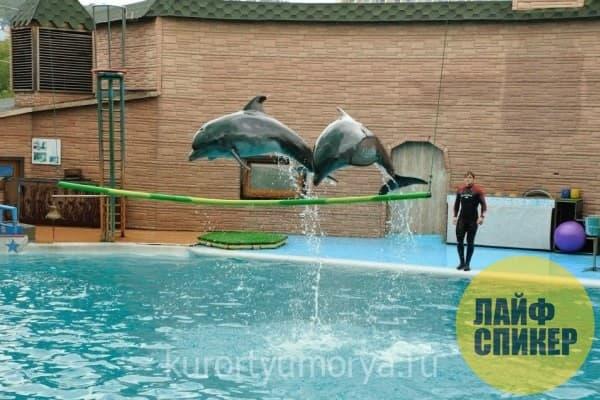 """Dolphinarium """"Aquatoria"""""""